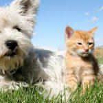 huisdieren verdelen bij scheiding